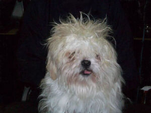 HOLIDAY DOG GROOMING...Save 20% off your current groomer's bill Kingston Kingston Area image 3