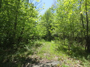 Great Acreage Near Coe Hill! Kawartha Lakes Peterborough Area image 2