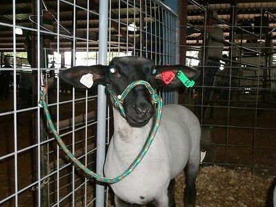 Sheep Goat Llama Halter With Clip Special