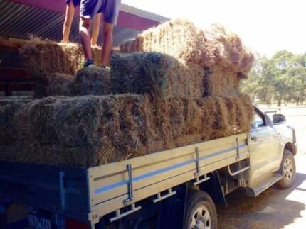 HAY BALES for Garden Beds MULCH / Animal Enclosures, Bedding etc