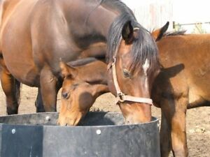 In Foal Thoroughbred Mares for Sale
