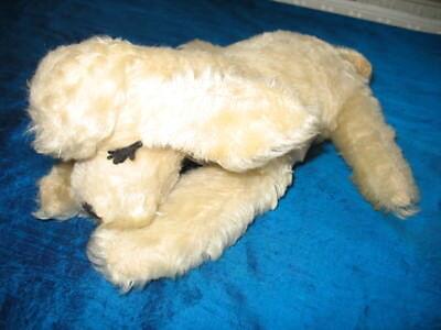 Süßer Steiff Hund, Pudel, Floppy Snobby Schlaftier mit Wimpern 28 cm, 60er Jahre