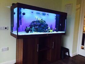 Juwel Rio 400 aquarium