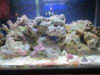 15 - 20 lbs of live rock. Saltwater Salt Water