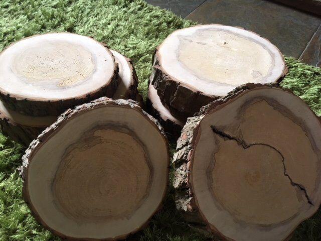 10 x Log Slices