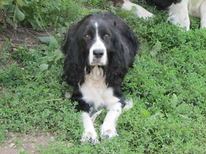 THE PERFECT FAMILY DOG! London Ontario image 2