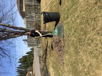 Cleaning -dump runs -lawn cuts -general cleanup