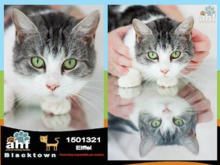 Stunning female TABBY in URGENT need!has been at pound for 83DAYS Blacktown Blacktown Area Preview