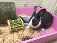 Beautiful rabbit called Lola. One year old, very healthy and very friendly.