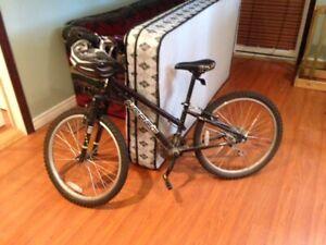 Girls Norco mountain bike.   $80