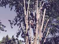 Al's Tree Removal. Lowest rates. Cut. Dispose.
