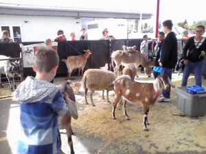 Travelling  Petting Zoo for events, birthdays, promotions