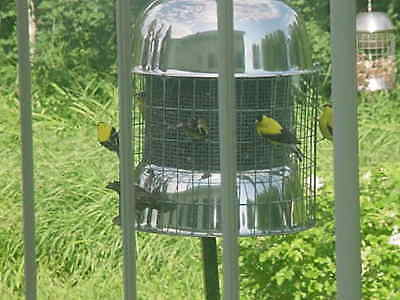 ORIGINAL CABIN SIZE  SQUIRREL PROOF SS STEEL WILD BIRD FEEDER ON EBAY SINCE 1992