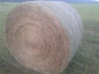----------Hay for sale------------