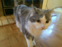 Free Cat - Seeking a Kind Heart