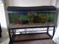 Large fish tank on stand, with 6 goldfish and acessories