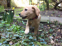 Cambridge PhD Student + A *LOVELY* dog looking to rent a room/flat/house in Central Cambridge