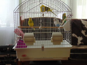 four budgies with cage
