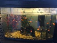 BEAUTIFUL 100L FISH TANK WITH FISH AND SEVERAL ACCESSORIES!