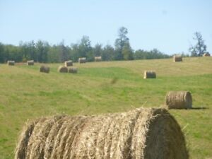 Quality Hay for Sale; Ness Lake Rd, Prince George; $75