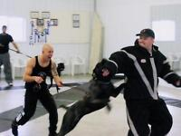 obedience and personal protection k9 training