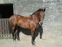 Horse for part loan