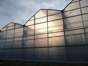 PATi Poly Plastic for Greenhouse, 8mils thick diffused