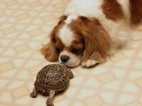 Homeward Bound Dog/Animal Care