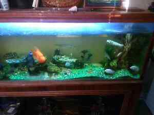 150 gallon tank plus everything included check info