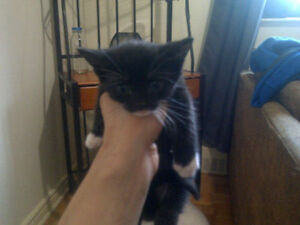i have beautiful kittens looking for a LOVING home.