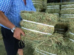 Compressed Timothy Hay Bales for sale (45 pounds each)