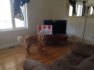 DAVID JAMES PAINTING  -  HOUSE PAINTER Cornwall Ontario image 5