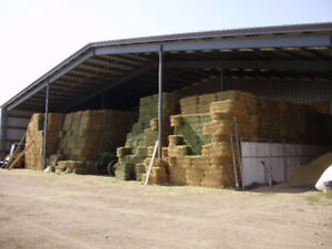 3rd cut small square Alfalfa bales for sale.