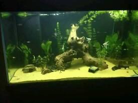 400 litre beta fishtank