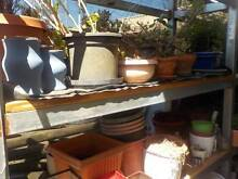 Gardening Products - Plants - Plant Pots O'Connor Fremantle Area Preview