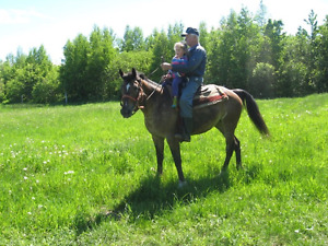 Appaloosa Mare 15 years old for sale