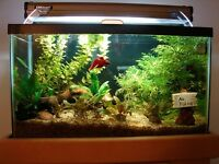 Looking for five gallon tank with hood and filter