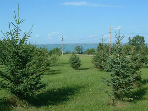 VACANT LOTS @ JACKFISH LAKE Starting @ $34,000!