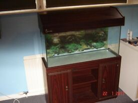 Clear Seal Aquarium 130L (dimensions 12in x 18in x 36in) very good condition with display cabinet