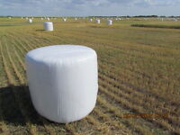 SILAGE Wheat Bales & Oat Bales