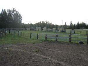 Affordable indoor horse board west of edmonton Edmonton Edmonton Area image 3