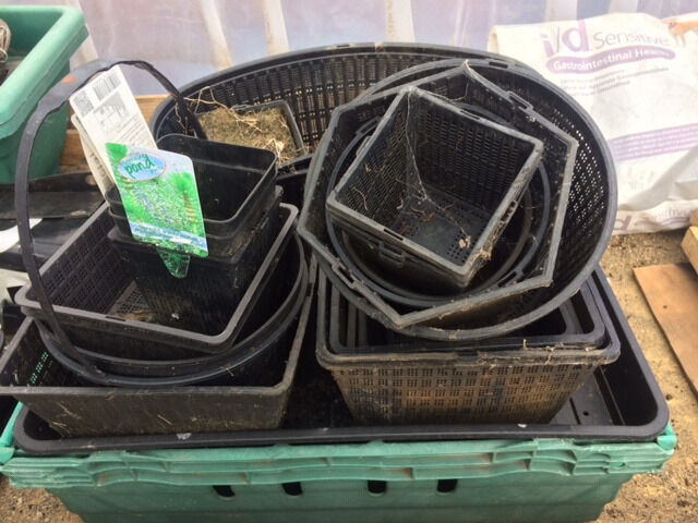 Pond Plant Baskets/Pots Various sizes in good conditionin Sunderland, Tyne and WearGumtree - I good mixture of Pond Plant Baskets/Pots in Various sizes in good condition. Most if not all types/size of baskets are there.. I can deliver anywhere in Sunderland for £3.00 Also have various pond plants for sale. cheap shoots and larger grown...