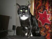 Cat is now home safe and sound. Oddly he has turned up with his original collar on. Thank you.