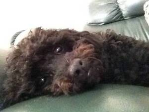 DOG WALKING AND PET SITTING/MINDING Doncaster Manningham Area Preview
