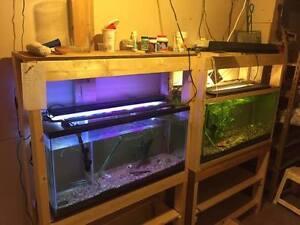 5 Fish Tanks