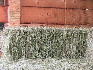 Yukon Grown Hay