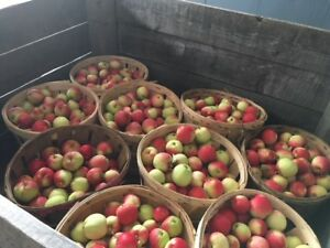 DROP APPLES for sale!