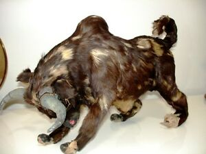 BULL Glass Eyes REAL Fur Leather Gauze Mache WEIRD fun & WHIP Cambridge Kitchener Area image 1