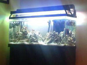 55 gallon salt water tank aquarium