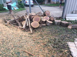FREE logs/mulch URGENT PICK UP Blacktown Blacktown Area Preview